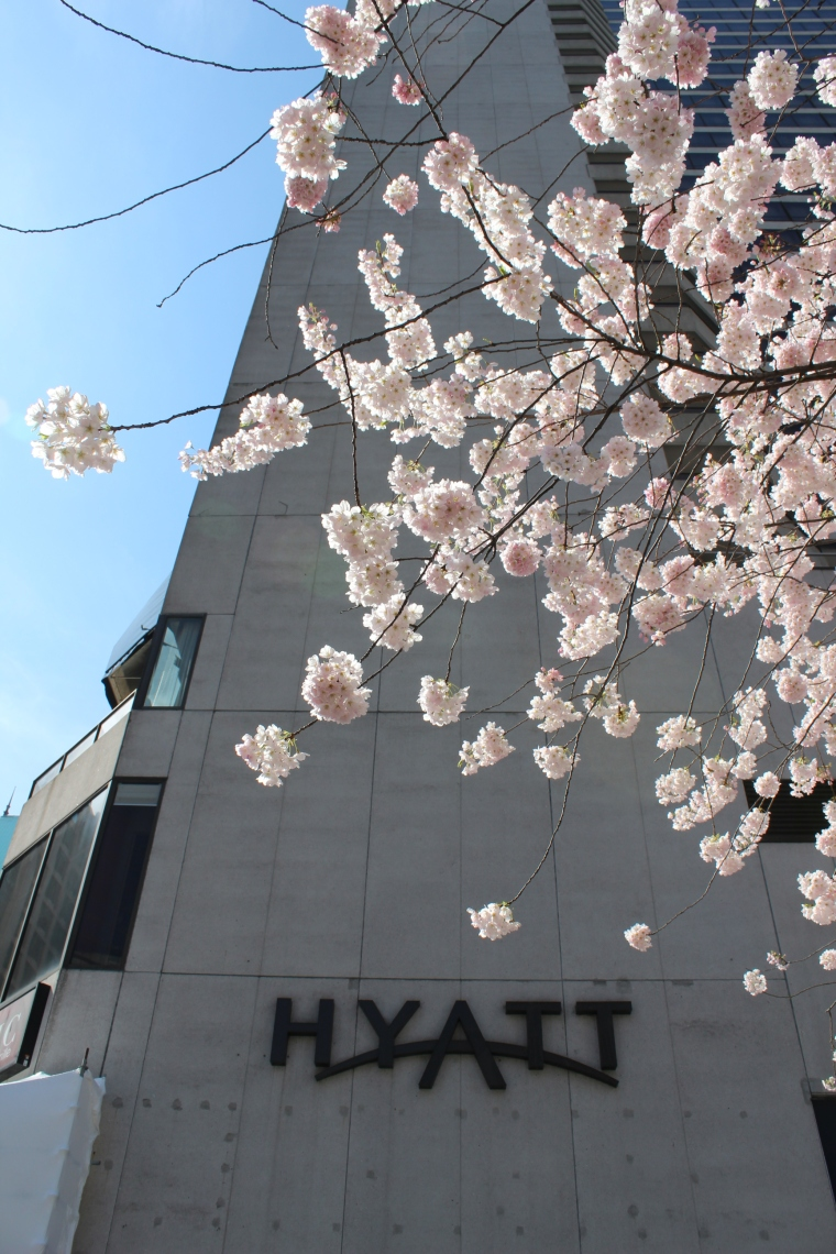 加拿大旅遊 溫哥華景點 溫哥華賞櫻 溫哥華櫻花節 VCBF Vancouver Cherry Blossom Festival