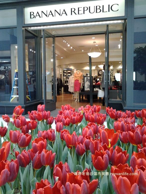 20130218 Oakridge Centre Tulips