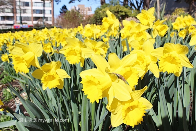 IMG_38912013narcissus