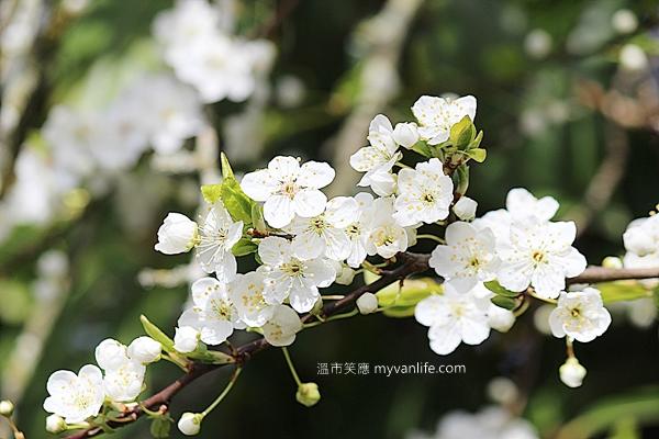 IMG_43592013plumflower