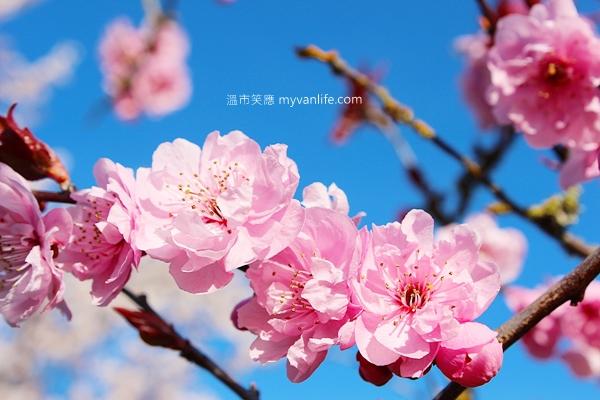 IMG_45982013plumflower