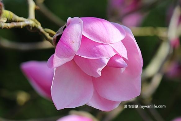 IMG_43792013木蘭