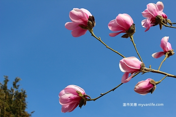IMG_44072013木蘭