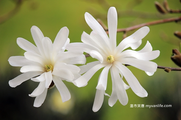 IMG_52112013木蘭