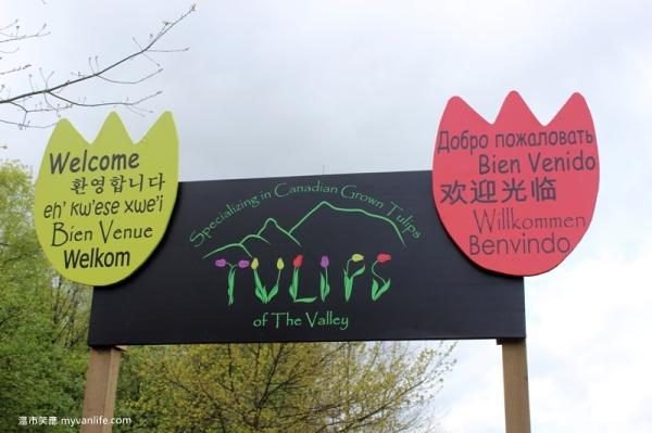 IMG_6927Fraser River Velly Tulips Festival