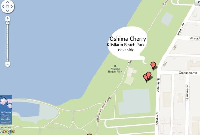 Kistilano Oshima Cherry Map