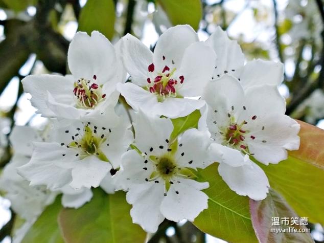 flowerWP_20140418_19_33_06_Pro20140418 Kerrisdale