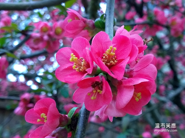 flowerWP_20140418_19_42_24_Pro20140418 Kerrisdale