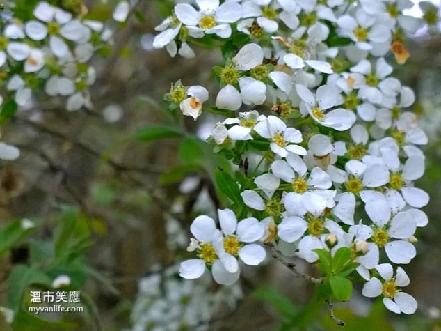 flowerWP_20140418_19_44_27_Pro20140418 Kerrisdale