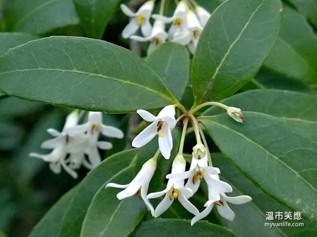 flowerWP_20140418_19_50_14_Pro20140418 Kerrisdale