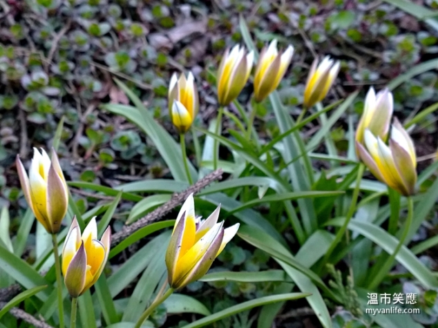 flowerWP_20140418_19_54_20_Pro20140418 Kerrisdale