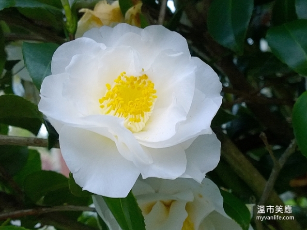 flowerWP_20140418_19_55_15_Pro20140418 Kerrisdale