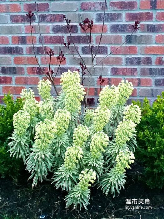 flowerWP_20140418_20_20_56_Pro20140418 Kerrisdale