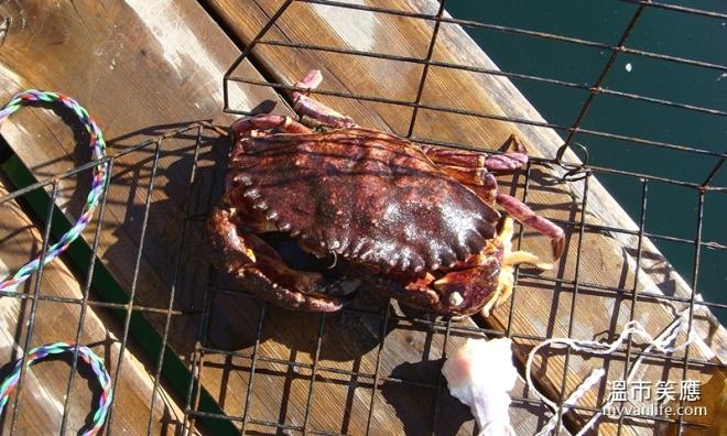 activityDSC08013-2crabfishing