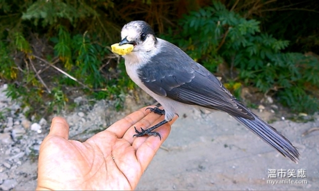 wildfeeding birdsmushroompicking