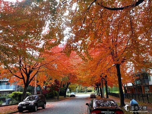 seasonJerico red trees-16fallleaves
